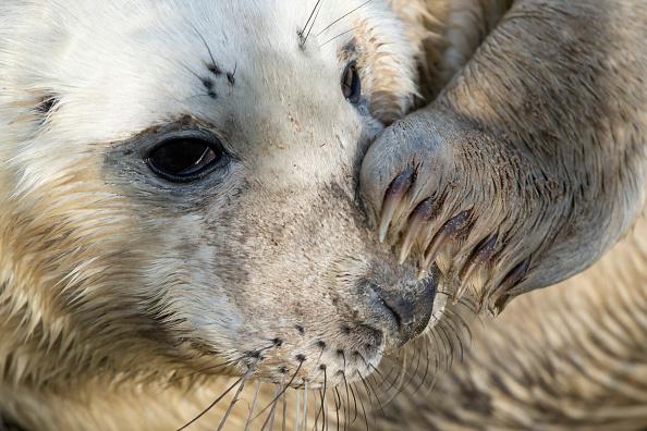 Grass「Seal Pup Season Continues At Donna Nook Reserve」:写真・画像(13)[壁紙.com]