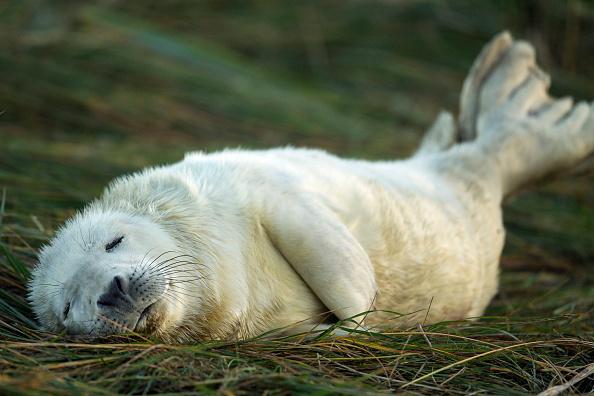 Grass「Seal Pup Season Continues At Donna Nook Reserve」:写真・画像(9)[壁紙.com]