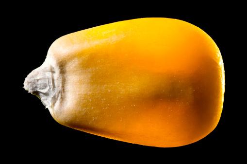Seed「Macro Image of a Single Corn Kernel Isolated on Black」:スマホ壁紙(5)