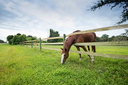 Horse「Florida, Anclote, Anclote River Park, Horse Grazing」:スマホ壁紙(12)