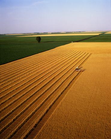 Plowed Field「Combine harvester in wheat field, aerial view, Minnesota, USA」:スマホ壁紙(2)