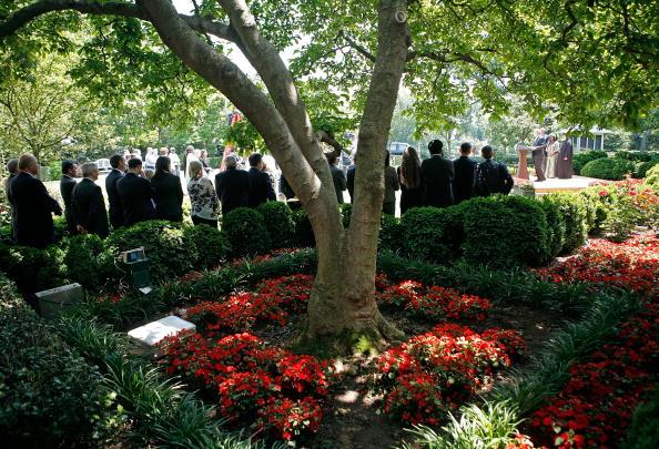 Tree「President Bush Makes Statement In Rose Garden」:写真・画像(19)[壁紙.com]