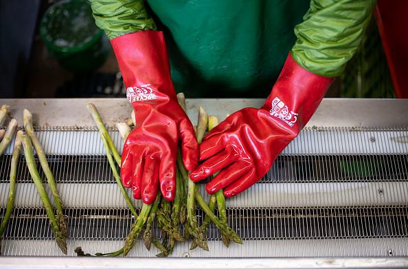 Asparagus「Locals Help Harvest During The Coronavirus Crisis」:写真・画像(6)[壁紙.com]