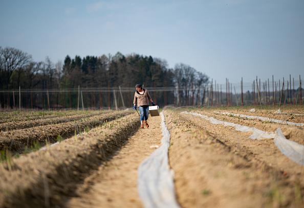 Asparagus「Locals Help Harvest During The Coronavirus Crisis」:写真・画像(0)[壁紙.com]