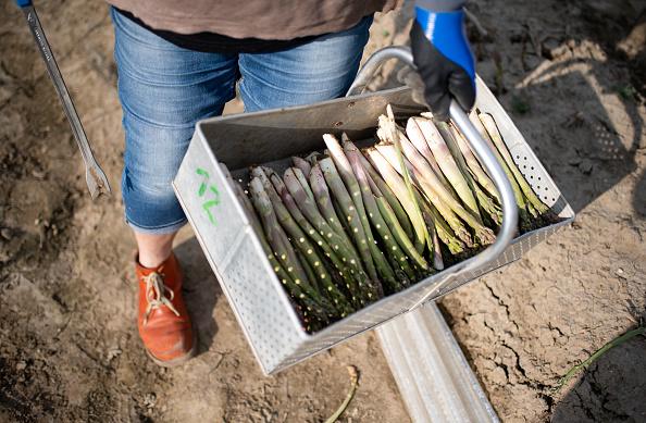Asparagus「Locals Help Harvest During The Coronavirus Crisis」:写真・画像(4)[壁紙.com]
