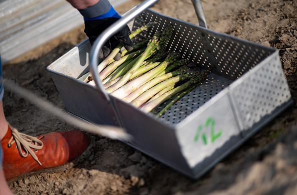 Asparagus「Locals Help Harvest During The Coronavirus Crisis」:写真・画像(10)[壁紙.com]