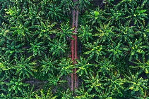 Reforestation「Aerial photo of palm trees on morning」:スマホ壁紙(2)