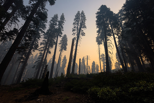 Atmosphere「Kings Canyon National Park after a forest fire, Hume, California, America, USA」:スマホ壁紙(10)