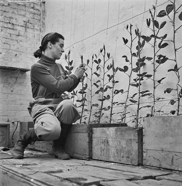 Botany「Girls' Garden」:写真・画像(5)[壁紙.com]