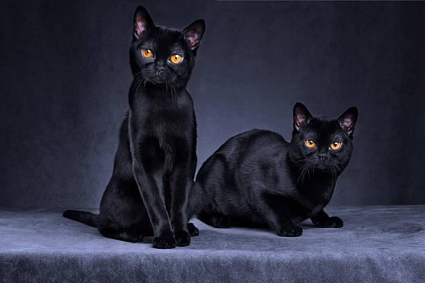 Black cats:スマホ壁紙(壁紙.com)