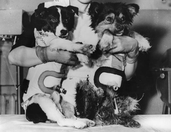 Animal Themes「Space Dogs」:写真・画像(12)[壁紙.com]