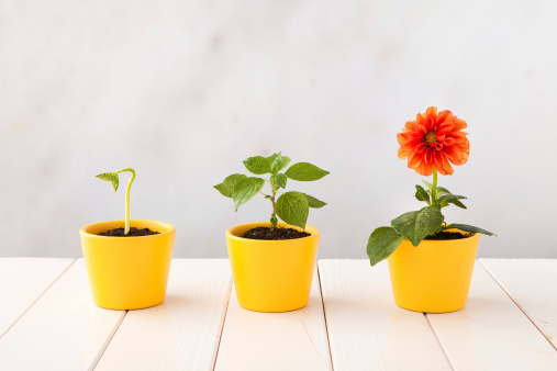 Aging Process「Three flower pots representing three stages of growth」:スマホ壁紙(4)