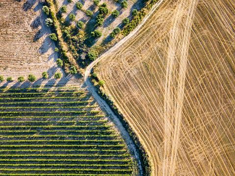 田畑「agricultural fields」:スマホ壁紙(3)