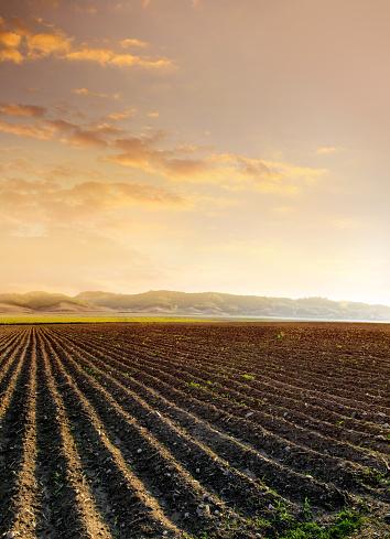 Plowed Field「agricultural landscape of empty plowed field」:スマホ壁紙(12)
