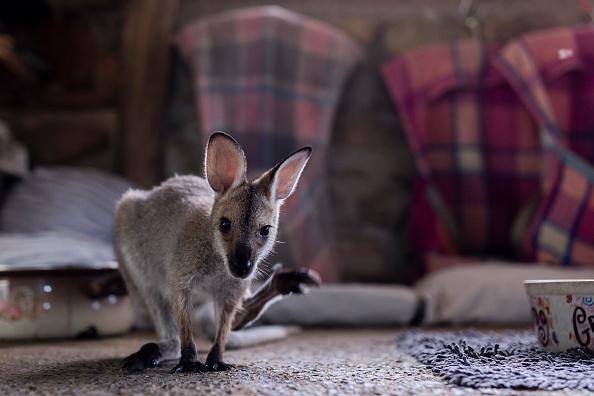 Animal Themes「Wytaliba and Torrington Communities Start To Rebuild Following Devastating Bushfires」:写真・画像(6)[壁紙.com]