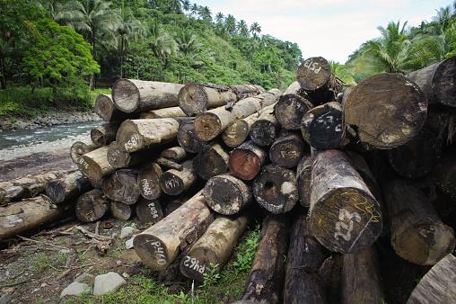 Lumber Industry「Logging in south Asia rainforest」:スマホ壁紙(8)