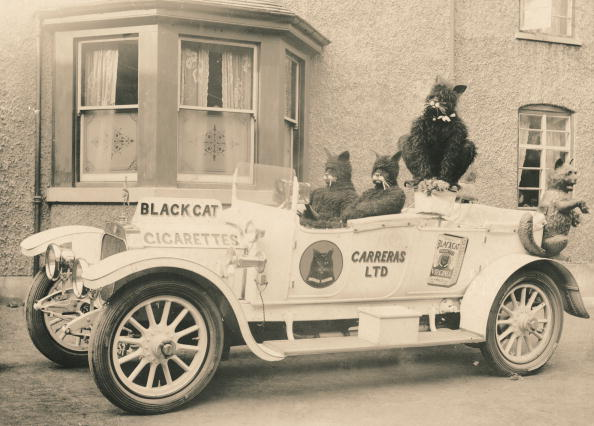 Marketing「Black Cat Car」:写真・画像(4)[壁紙.com]