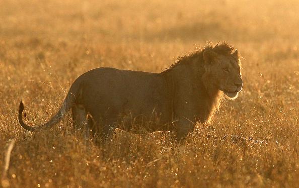 Kenya「Kenyan Safari」:写真・画像(12)[壁紙.com]