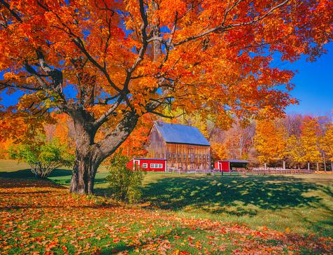 グリーン山脈「素朴な納屋、バーモント州ニュー イングランドと秋のサトウカエデ」:スマホ壁紙(17)