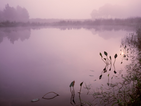 North Brabant「The Netherlands, Northern-Brabant, The Beerzedal, lake, dawn」:スマホ壁紙(1)