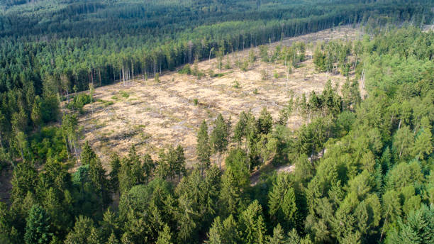 Deforested area, Taunus mountains, Germany:スマホ壁紙(壁紙.com)