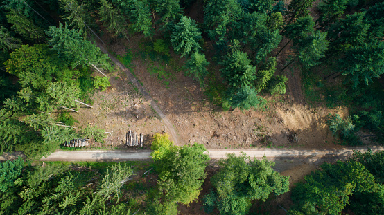 Lumber Industry「Deforested area, Taunus mountains, Germany」:スマホ壁紙(12)