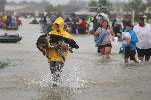 Animal「Epic Flooding Inundates Houston After Hurricane Harvey」:写真・画像(15)[壁紙.com]