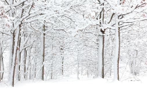 Snowdrift「Winter」:スマホ壁紙(4)