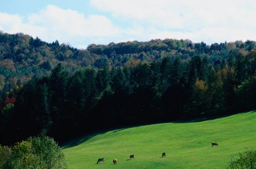 グリーン山脈「Champlain Valley Farm Below the Green Mountains」:スマホ壁紙(3)