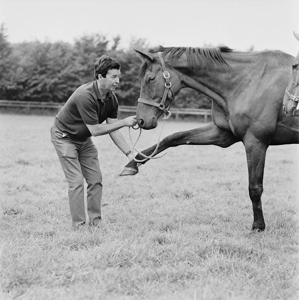Racehorse「Dick Francis And Persian War」:写真・画像(6)[壁紙.com]