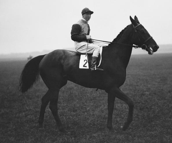 Racehorse「Brown Jack」:写真・画像(1)[壁紙.com]
