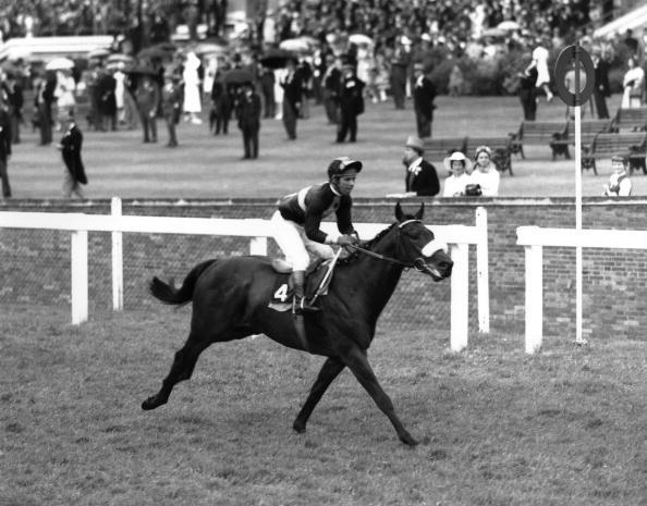 Horse「ASCOT」:写真・画像(16)[壁紙.com]