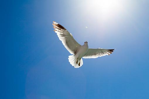 Turkey - Bird「Seagull flaying」:スマホ壁紙(10)