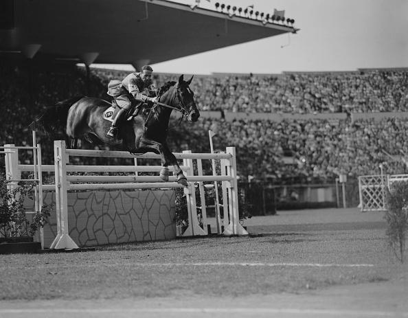 Horse「Douglas Stewart」:写真・画像(10)[壁紙.com]