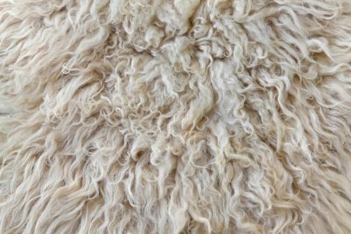 Animal Hair「Sheepskin」:スマホ壁紙(13)