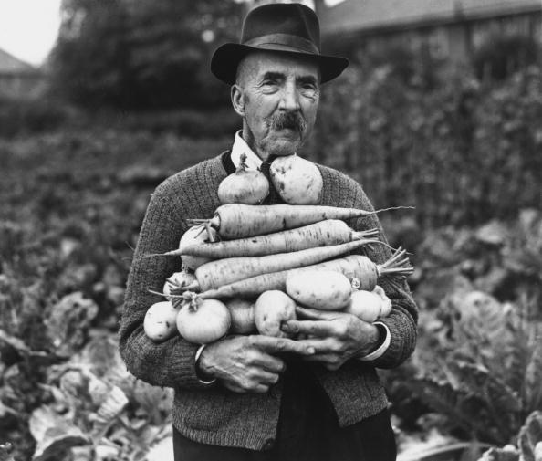 Success「Prize Vegetables」:写真・画像(12)[壁紙.com]