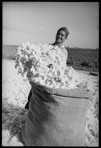 Max Penson「In The Cotton Field」:写真・画像(12)[壁紙.com]