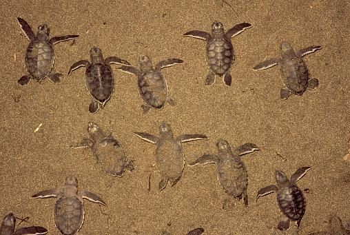 Effort「Green Turtle Babies in the Sand」:スマホ壁紙(14)