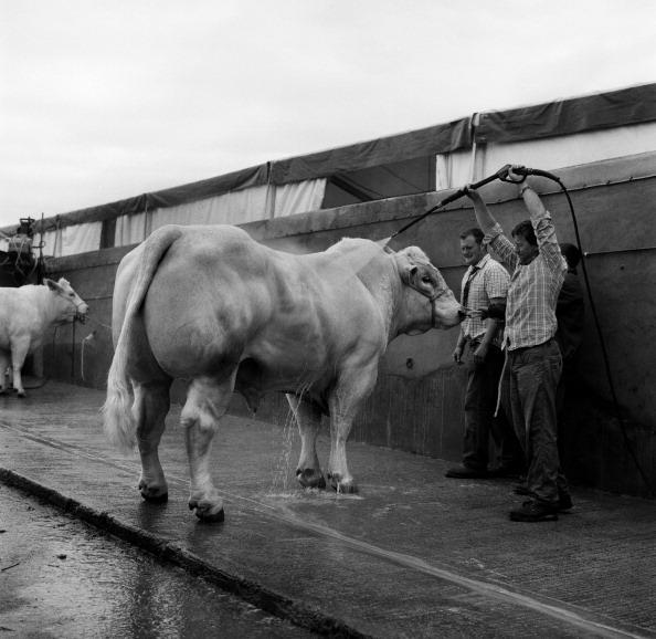 Tom Stoddart Archive「Great Yorkshire Show 2010」:写真・画像(2)[壁紙.com]