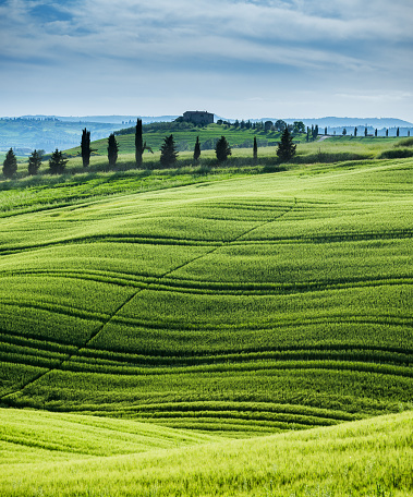 Val d'Orcia「Morning landscape from Tuscany」:スマホ壁紙(5)