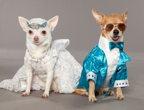 Cool Attitude「dogs in tux and wedding dress」:スマホ壁紙(1)