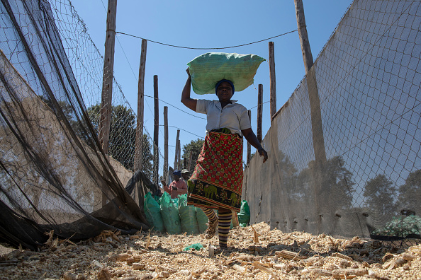Zimbabwe「Farming In Zimbabwe」:写真・画像(7)[壁紙.com]