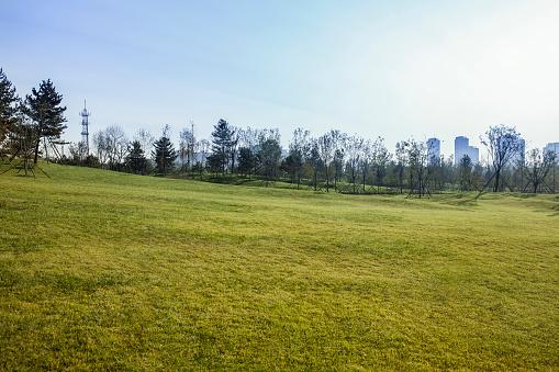 Wide Shot「Charming scenery in a park」:スマホ壁紙(9)