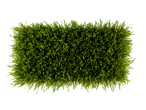 Rectangle「Patch of green grass on white background」:スマホ壁紙(12)
