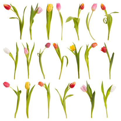 Digital Composite「Montage of tulips」:スマホ壁紙(9)
