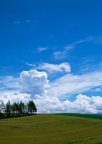 Hokkaido「Grassy Plain」:スマホ壁紙(2)