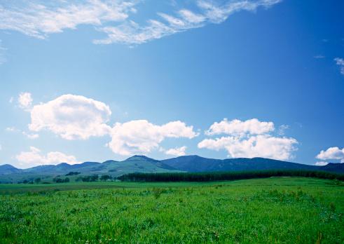 Grass Area「Grassy Plain」:スマホ壁紙(19)