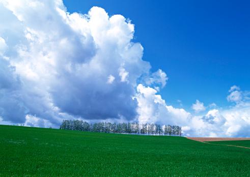 Hokkaido「Grassy Plain」:スマホ壁紙(4)