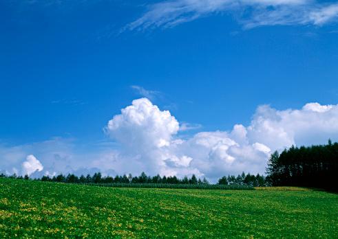Hokkaido「Grassy Plain」:スマホ壁紙(6)