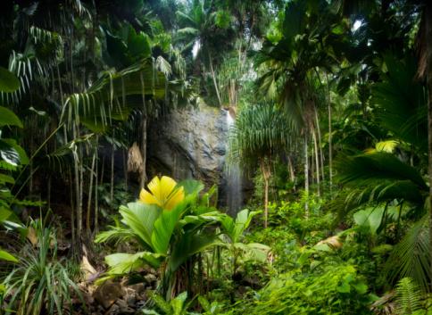 Rare「Tropical Rainforest with Waterfall」:スマホ壁紙(3)
